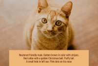 Lost Pet Flyer Template Download Free (2nd Design Sample for a Cat)