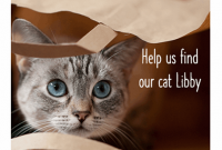 Lost Pet Flyer Template Download Free (4th Design Sample for a Cat)