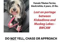 Missing Dog Flyer Template Free Design (The 4th Best Idea)